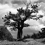 Storm Tree Print by Tranquil Light  Photography