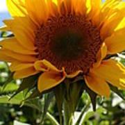 Sunflower Highlight Print by Kerri Mortenson