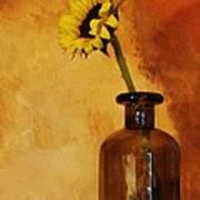 Sunflower In A Brown Bottle Print by Marsha Heiken