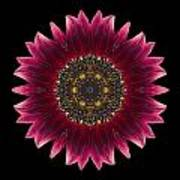 Sunflower Moulin Rouge I Flower Mandala Print by David J Bookbinder