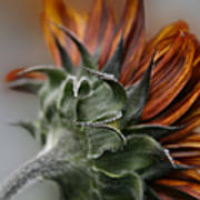 Sunflower Print by Sharon Mau