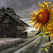 Sunflower Watch Print by Debra and Dave Vanderlaan