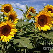 Sunflowers Print by Kerri Mortenson