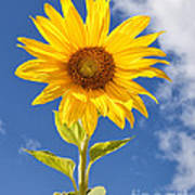 Sunny Sunflower Print by Joshua Clark