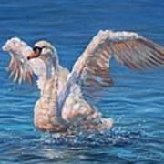Swan Print by David Stribbling