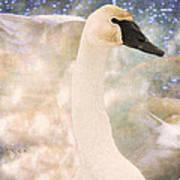 Swan Journey Print by Kathy Bassett