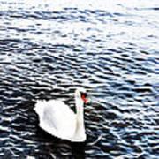 Swan Print by Mark Rogan