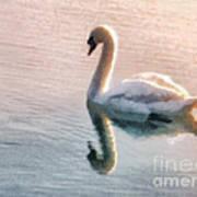 Swan On Lake Print by Pixel  Chimp