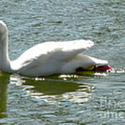 Swan Reflection Print by Terry Weaver