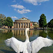 Swan Spreads Wings In Front Of State Theatre Stuttgart Germany Print by Matthias Hauser