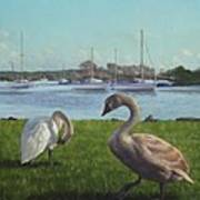 swans at Christchurch harbour Print by Martin Davey