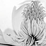 Sweet Magnolia Print by Sabrina L Ryan