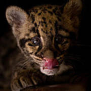 Taking A Licking Print by Ashley Vincent