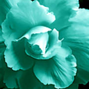 Teal Green Begonia Floral Print by Jennie Marie Schell