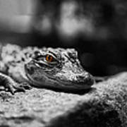 The Alligator's Eying You Print by Linda Leeming