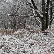The Beauty Of Winter Print by Aimee L Maher Photography and Art Visit ALMGallerydotcom