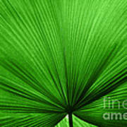 The Big Green Leaf Print by Natalie Kinnear