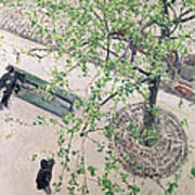 The Boulevard Viewed From Above Print by Gustave Caillebotte