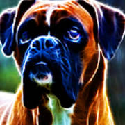 The Boxer - Electric Print by Wingsdomain Art and Photography
