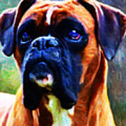The Boxer - Painterly Print by Wingsdomain Art and Photography
