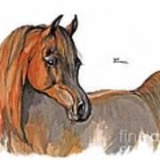 The Chestnut Arabian Horse 2a Print by Angel  Tarantella