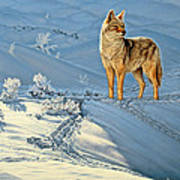 the Coyote - God's Dog Print by Paul Krapf