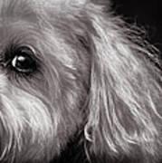 The Dog Next Door Print by Bob Orsillo