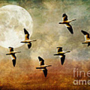 The Flight Of The Snow Geese Print by Lois Bryan