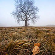 The Lone Oak Print by Davorin Mance