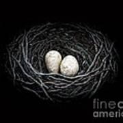 The Nest Print by Edward Fielding