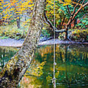 The Old Swimming Hole Print by Edward Fielding