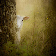 The Shy Lamb Print by Loriental Photography