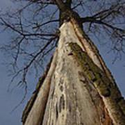 The Strange Tree Print by Guy Ricketts