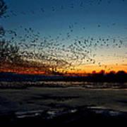 The Swarm Print by Matt Molloy