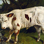 The White Calf Print by Gustave  Courbet