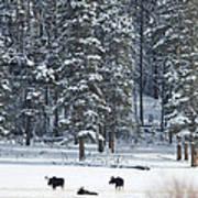 Three Bull Moose Print by Deby Dixon