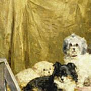 Three Dogs Print by Charles van den Eycken