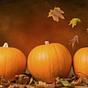 Three Pumpkins Print by Amanda And Christopher Elwell