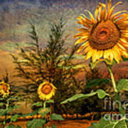 Three Sunflowers Print by Adrian Evans