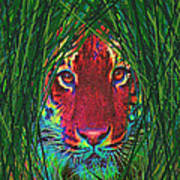 Tiger In The Grass Print by Jane Schnetlage