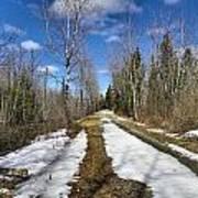 Trail Thaw Print by Gene Cyr