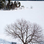 Tree And The Point In Winter Print by Rob Huntley
