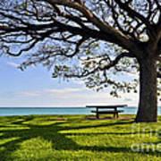 Tree Canopy Print by Gina Savage