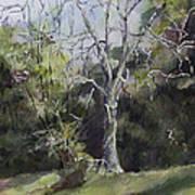Tree Print by Janet Felts