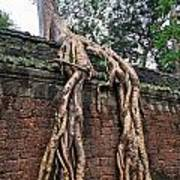 Tree Roots On Ruins At Angkor Wat Print by Sami Sarkis