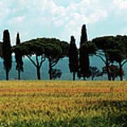 Tree Row In Tuscany Print by Heiko Koehrer-Wagner