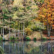 Trees In Autumn Print by Natalie Kinnear