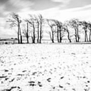 Trees In Snow Scotland Iv Print by John Farnan