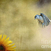Tufted Titmouse Flying Over Flower Print by Dan Friend