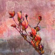 Tulip Tree Budding Print by J Larry Walker